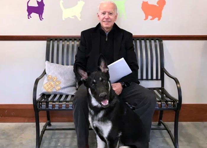 Джо Байден с собакой