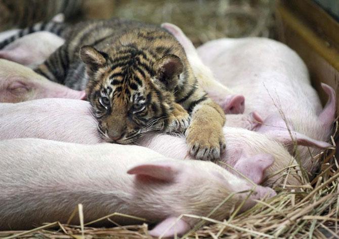 Фотогалерея Животные неестественная дружба