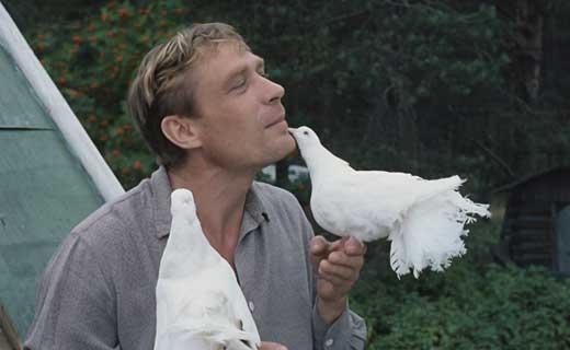 Михайлов Любовь и голуби