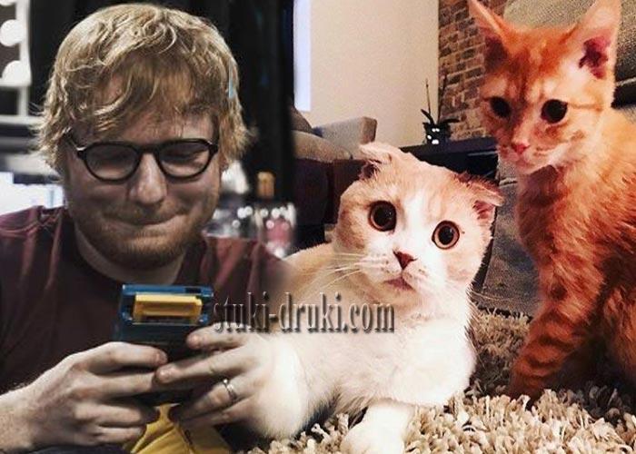 Эд Ширан завел Инстаграм для своих котов