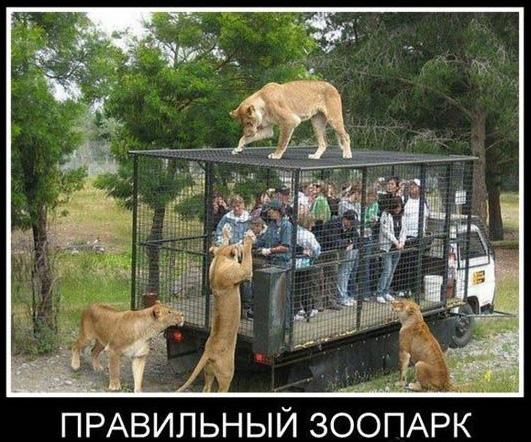 зоопарк прикол